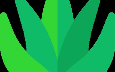 Aloe vera webikon
