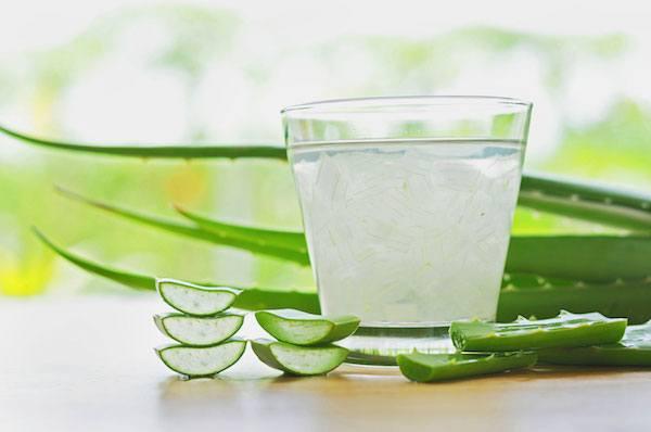 Aloe vera ital